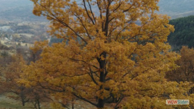 automne_coursegoules22